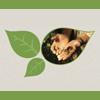 Imagem traz desenhos de folhas e mãos abertas com sementes