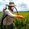 Técnico, devidamente protegido com chapéu, luvas de borracha, e máscara, aplica defensivo agrícola em uma lavoura.